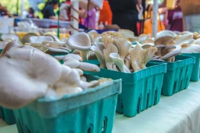 Local mushrooms at the farmers market