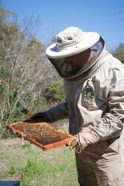 Danny Cannon inspecting a hive